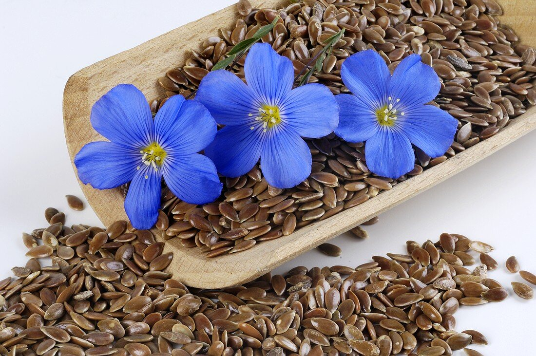 Flax flowers and linseed