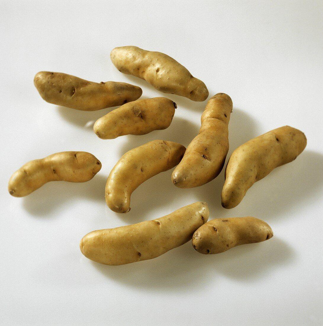 Potatoes, variety 'Bamberger Hörnchen'