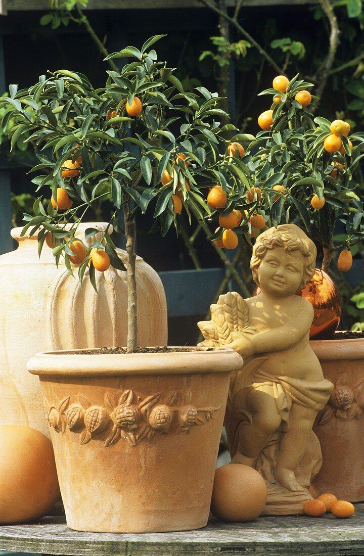 Kumquat trees in terracotta pots and terracotta figure
