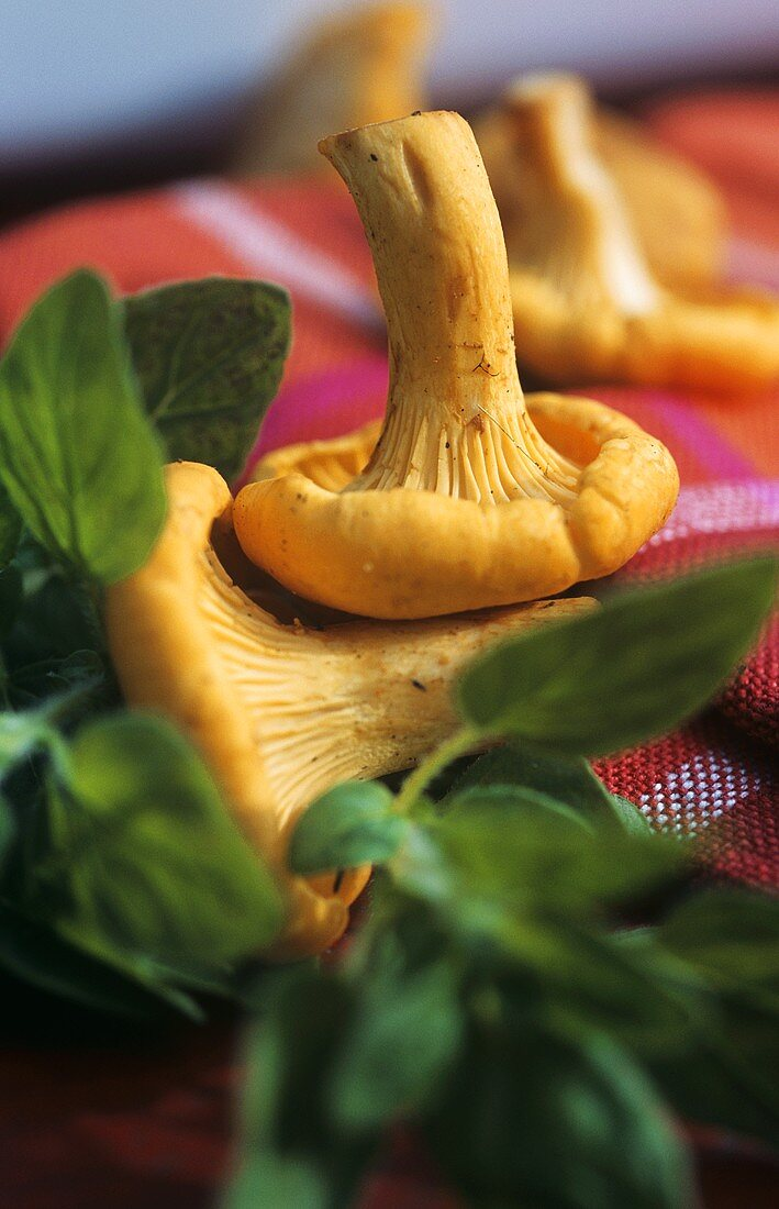 Chanterelles and culinary herbs (close-up)