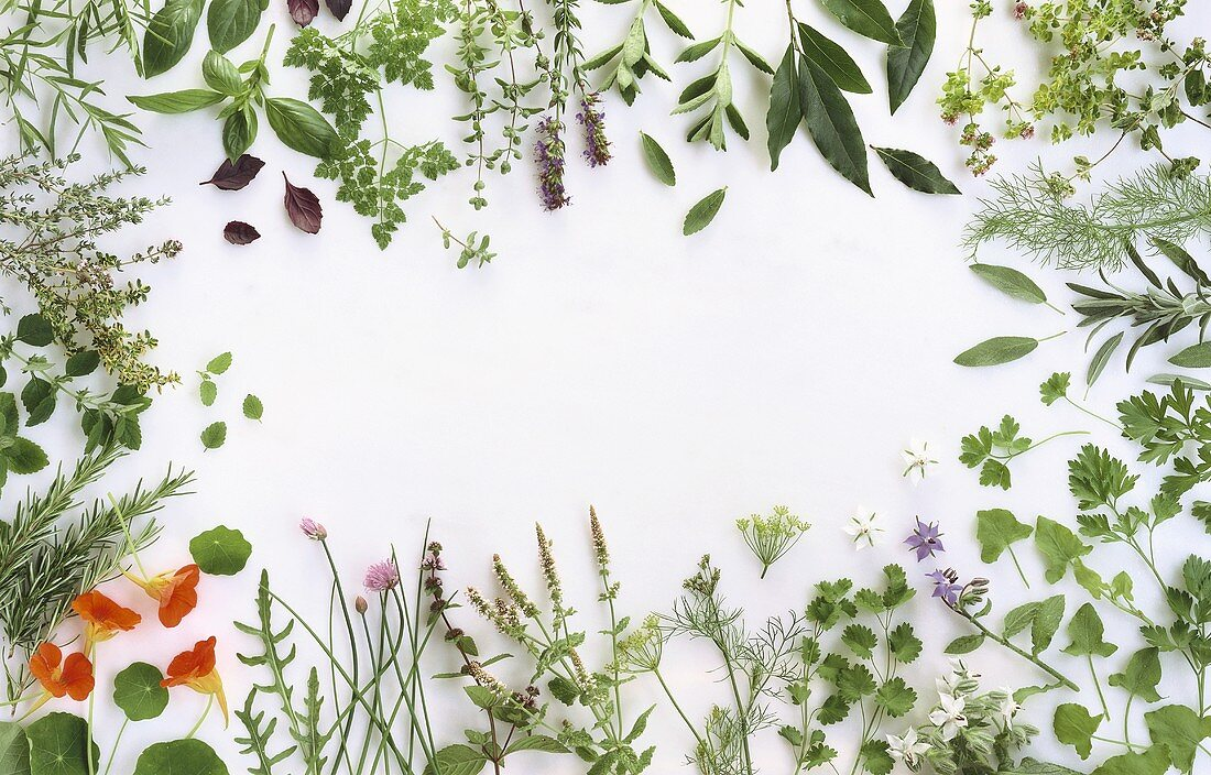 Various herbs framing the picture