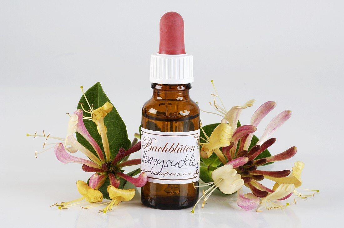 Bach Flower tincture: honeysuckle
