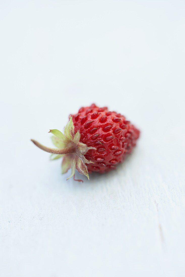 A wild strawberry
