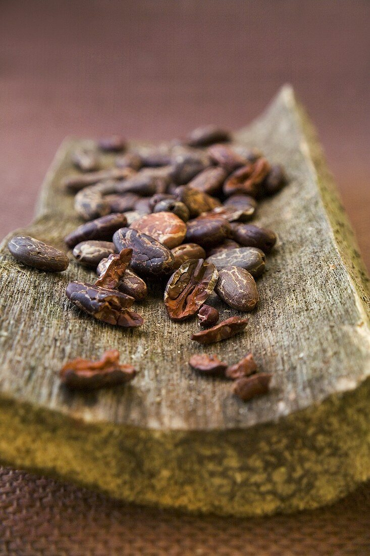 Cocoa beans on a piece of tree bark
