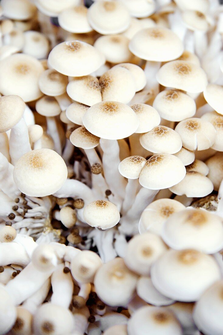 Enokitake mushrooms