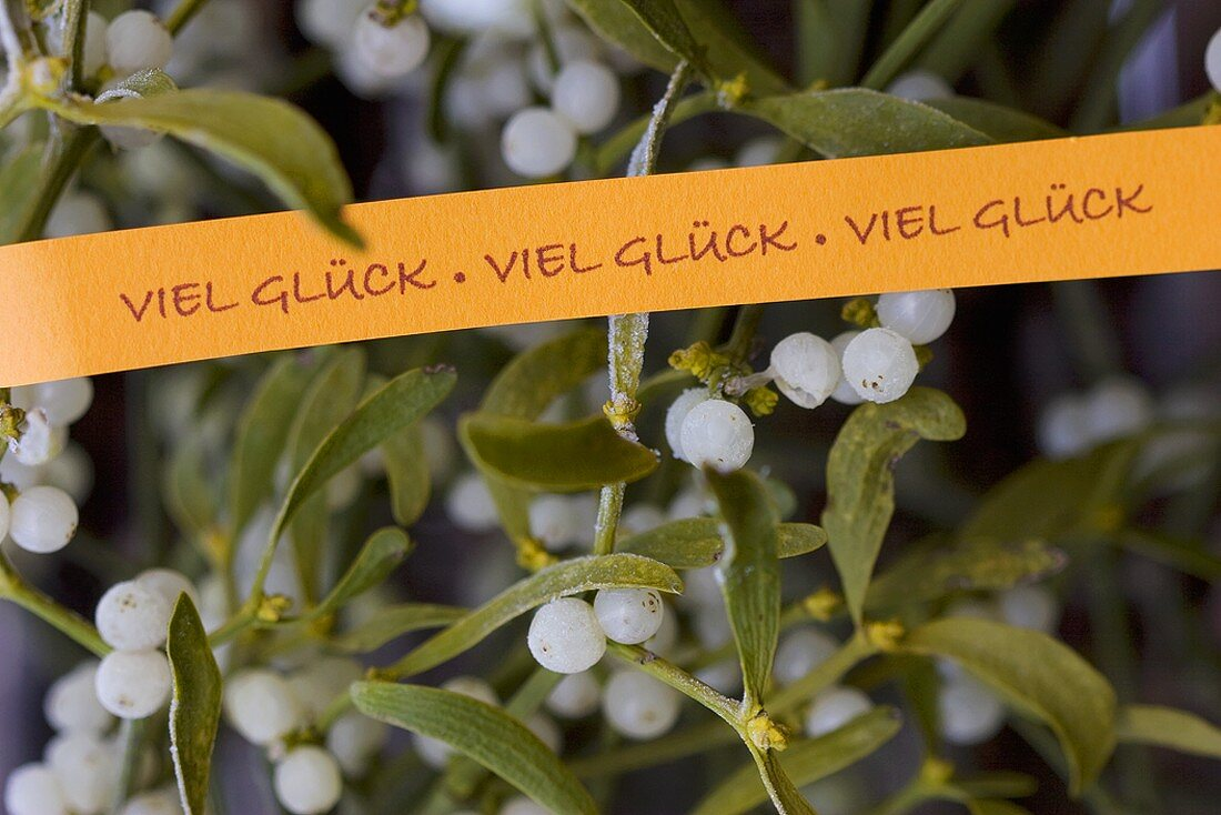 Mistletoe with Good Luck ribbon