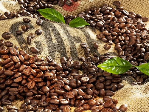 Coffee beans and leaves on jute sack