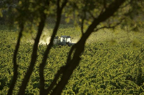 Tractor in vineyard, Chiroubles, Beaujolais, France
