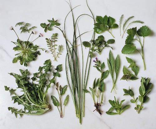 Various herbs on marble slab