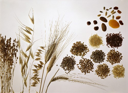 Still life with cereal ears and grains