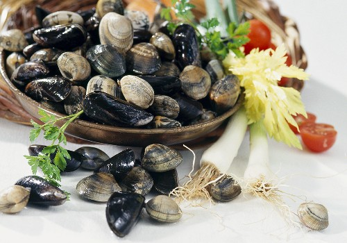 Still life with carpet shells, clams and mussels