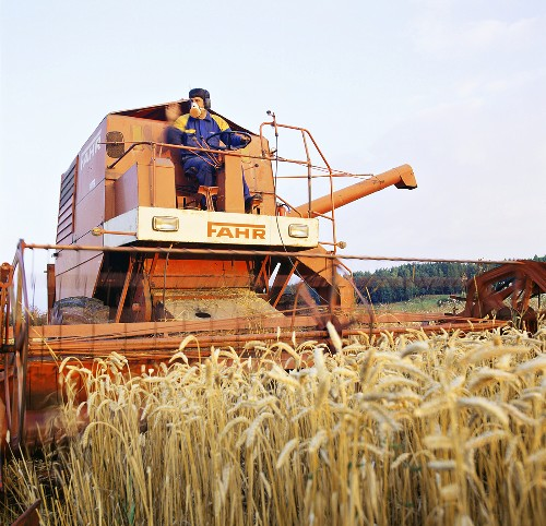 Combine harvester at work