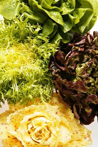Lettuce, curly endive, oak leaf lettuce & red & white radicchio