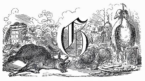 Still life: letter G, goat, geese, greens (Illustration)