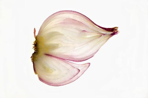 Red onion (lengthwise slice), backlit