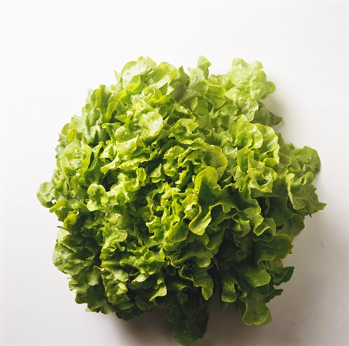 A Head of Leaf Lettuce