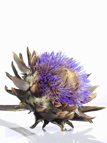 An artichoke flower