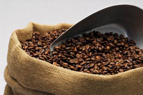 Roasted coffee beans with scoop in a sack