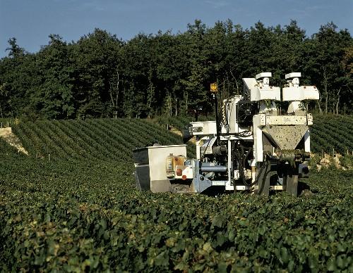 Maschinelle Weinlese in La Fourchaume, Chablis, Frankreich