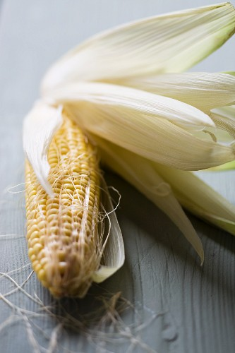 A corn cob with leaves and cornsilk