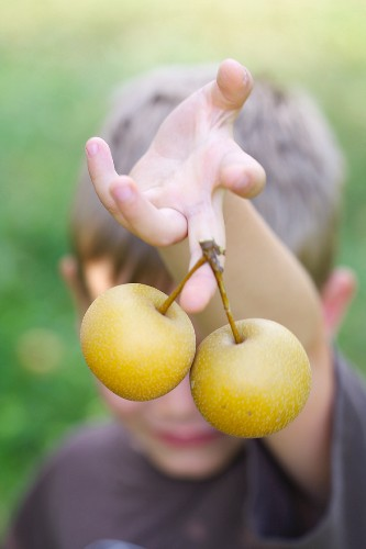 A Boy Holding Asian Pears
