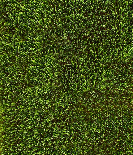 Full Screen of Green Wheat Grass