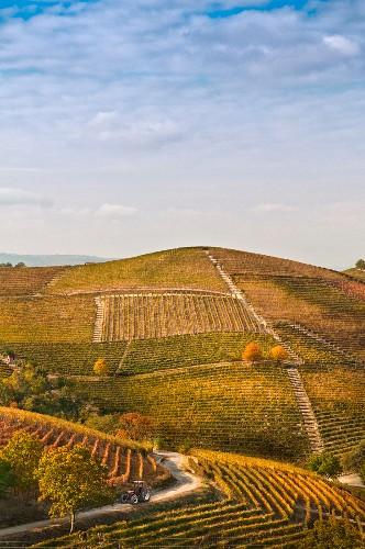 Hillside Vineyard, Barbaresco, Italy