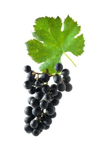 Dornfelder grapes with a vine leaf