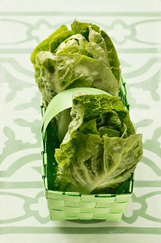 Frische Salatherzen im grünen Korb
