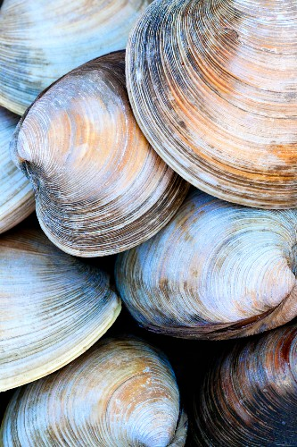 A close up of clam shells