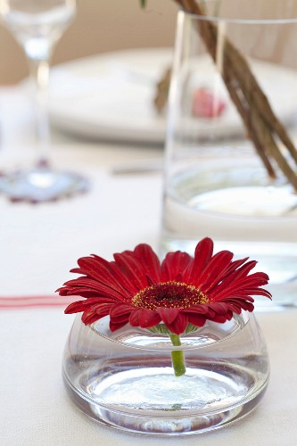 Gerbera daisy in squat glass vase on table