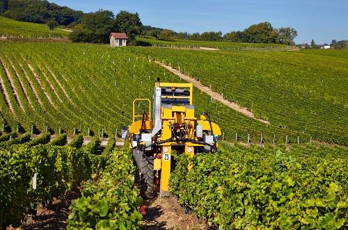 Maschinelle Ernte von Sauvignon Blanc Trauben im Weinberg der Domaine Andre Robineau (Sancerre, Cher, Frankreich)