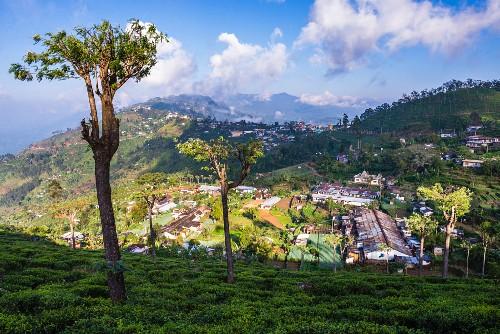 The town of Haputale seen from a tea plantation, Sri Lanka Hill Country, Nuwara Eliya, Sri Lanka