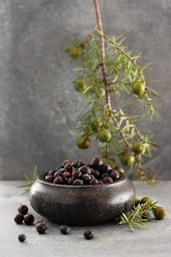 Juniper berries in a bowl with a sprig