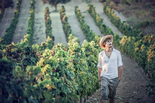 A winegrower in a vineyard (Cagliari, Sardinia, Italy)