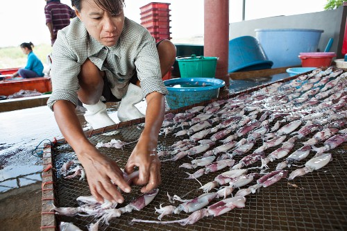 Squid drying (Thailand)