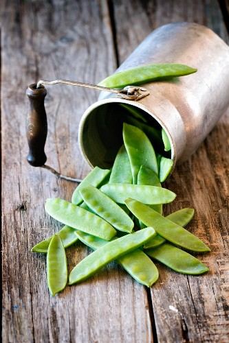 Mange tout in front of an old overturned milk churn