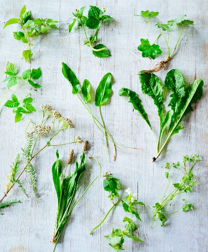 Various wild herbs (seen from above)