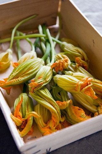 Courgette flower in a wooden box