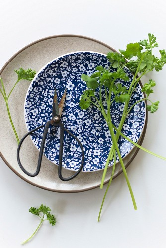 Parsley and coriander on a plate with scissors