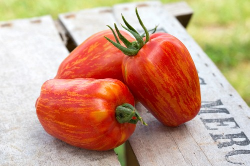 Three red heirloom tomatoes on a wooden crate in a garden