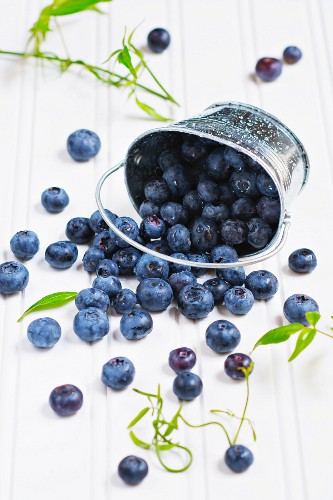 Fresh blueberries falling from a metal bucket