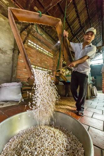 Mann stellt Süssigkeiten aus Palmzucker und Reis her (Cai Be, Vietnam, Indochina, Südostasien)