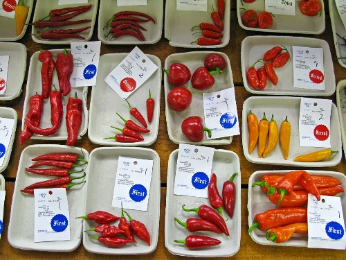 Various chilli peppers (packaged) at a market