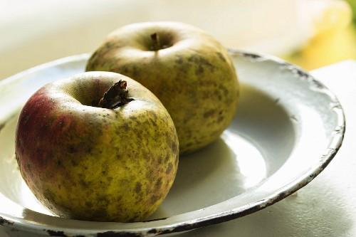 Two Boskop apples on an enamel plate