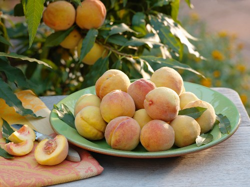 Freshly picked peaches in a bowl