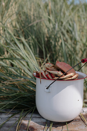 Crabs in a bucket on a jetty