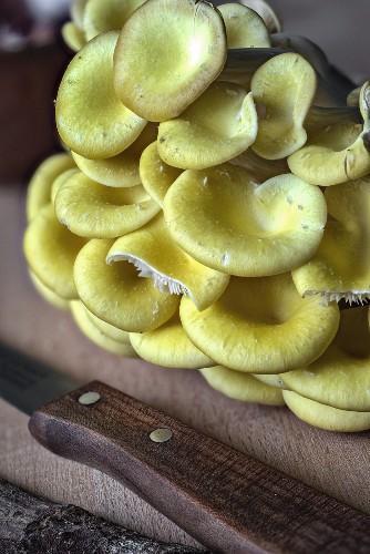Frische Limonenseitlinge mit Messer