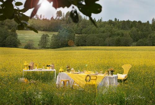 Set table in field of flowering rapeseed