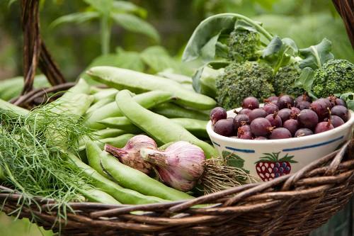Erntestillleben mit Dicken Bohnen, Knoblauch, Brokkoli, Dill und Jostabeeren in einer Schüssel